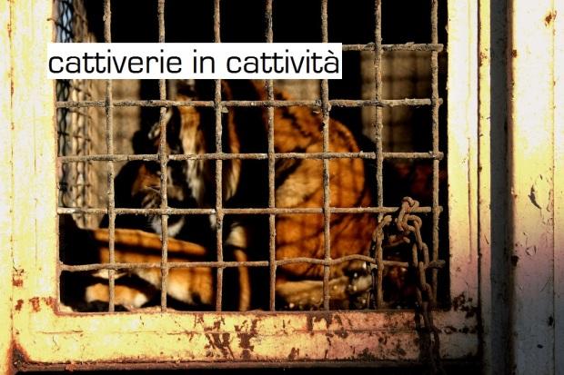 cattiverie